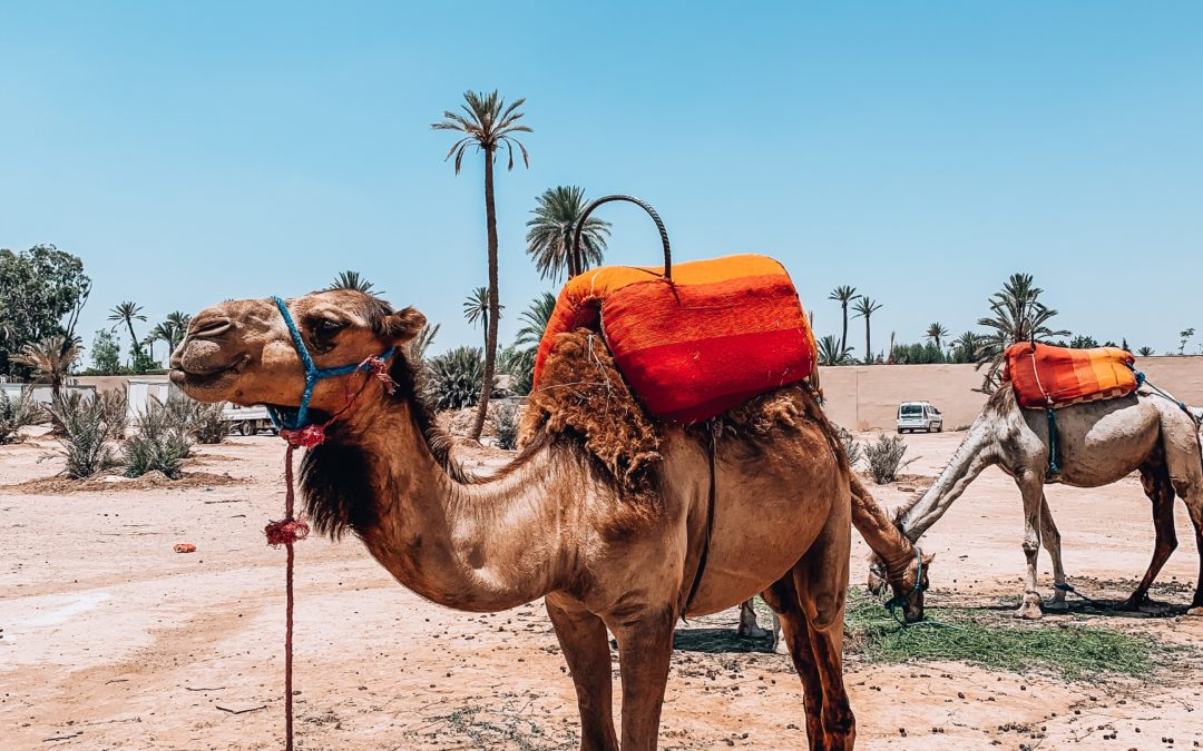 A la découverte de Marrakech